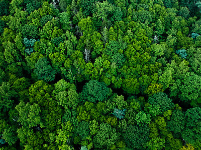 Aerial view of trees growing in Pisgah National Forest - p1166m2025148 by Cavan Images