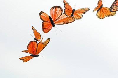 Artificial butterflies flying - p62319902f by Michele Constantini