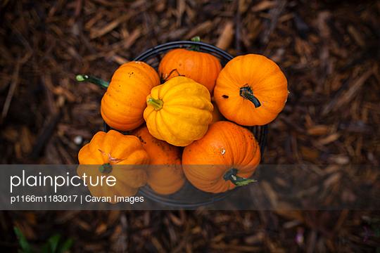 p1166m1183017 von Cavan Images