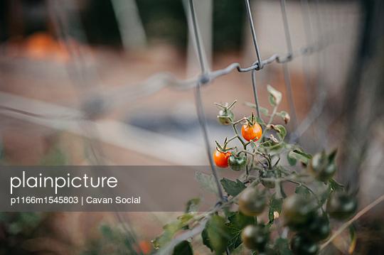 p1166m1545803 von Cavan Social