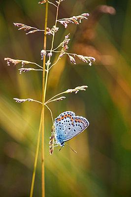 Butterfly - p1412m1575004 by Svetlana Shemeleva