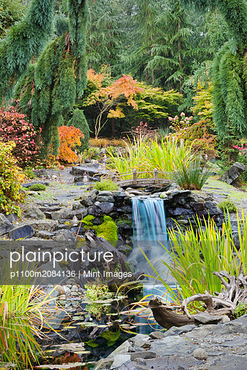 Autumn leaves on bushes around waterfall feature in landscaped garden,Federal Way, Washington, USA - p1100m2084136 by Mint Images