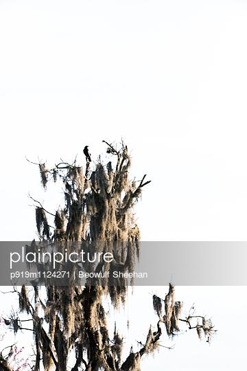 Bewachsener Baum - p919m1124271 von Beowulf Sheehan