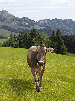 Portraits in Zürich - p3230113 von A. Gabriel-Jürgens