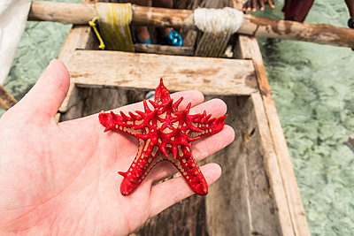 Starfish - p930m1541614 by Ignatio Bravo