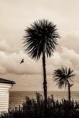 Palmen in Polen - p975m955658 von Hayden Verry