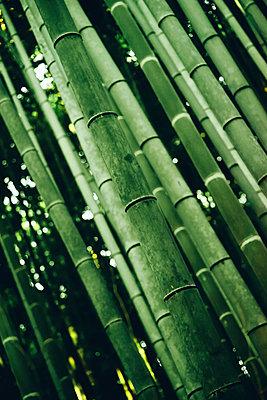 Japanischer Bambus in Arashiyama - p1180m958824 von chillagano