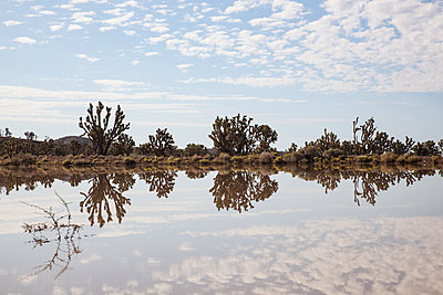Reflections On Lake - p1291m1548113 by Marcus Bastel
