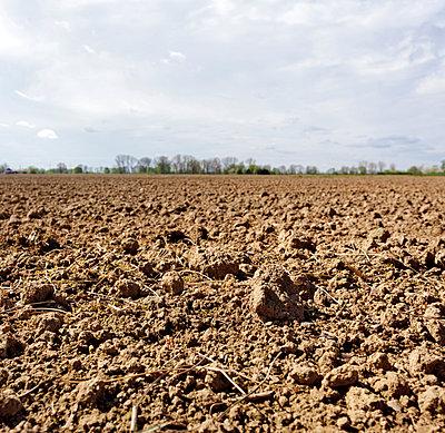 Field - p228m777616 by photocake.de