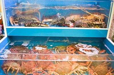 Fischmarkt und Krabbenbecken - p236m813350 von tranquillium