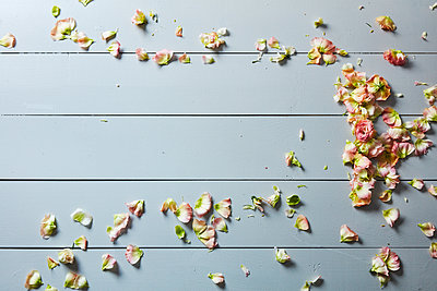flower petals - p1379m1525895 by James Ransom