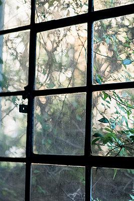 Fensterblick - p949m1200281 von Frauke Schumann