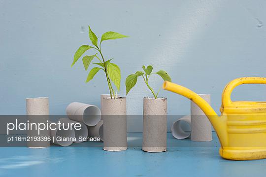 p116m2193396 by Gianna Schade