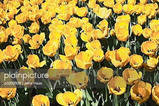 Flowerbed - p3200339 by Jens Haas