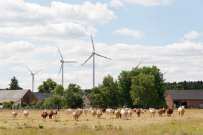 Kuhherde vor Windpark - p1079m1184980 von Ulrich Mertens