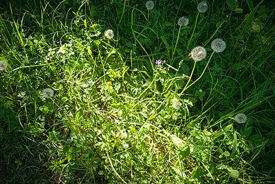 Sunbeam on meadow - p1418m1571754 by Jan Håkan Dahlström