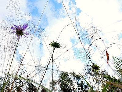 Wild flowers - p879m1193693 by nico