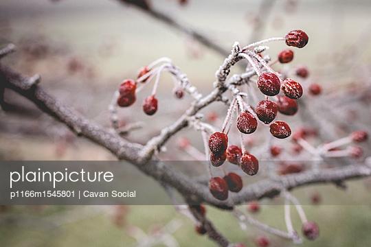p1166m1545801 von Cavan Social