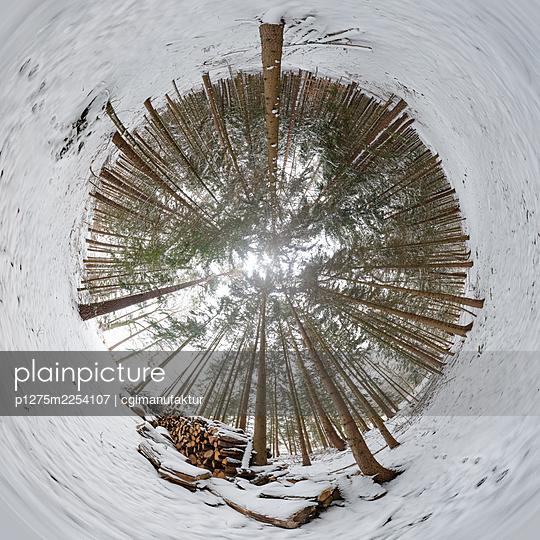 Fischaugen Fotografie, Wald im Winter - p1275m2254107 von cgimanufaktur