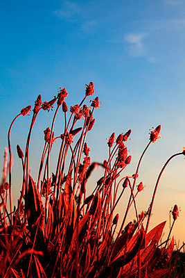 Red plants - p943m2293128 by Do-It-Studios