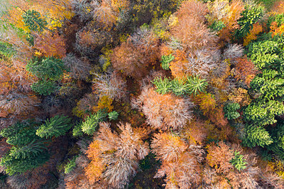 Germany, Bavaria, autumnal mixed forest near Icking, aerial view - p300m2104433 von Martin Siepmann