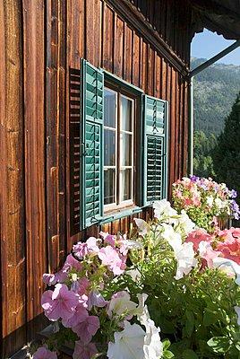 Petunias in window box below window of wooden house - p1183m997731 by von Oswald, Yvonne