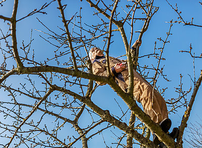 Man on tree - p312m2139335 by Pernille Tofte