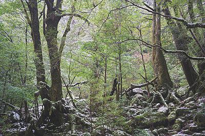 Zauberwald - p798m898934 von Florian Loebermann