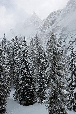 Winter - p441m956143 by Maria Dorner