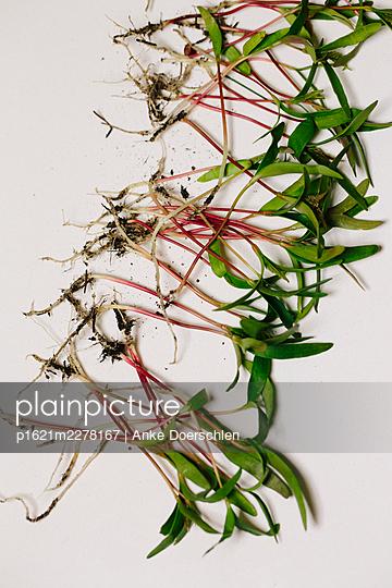 Seedlings - p1621m2278167 by Anke Doerschlen