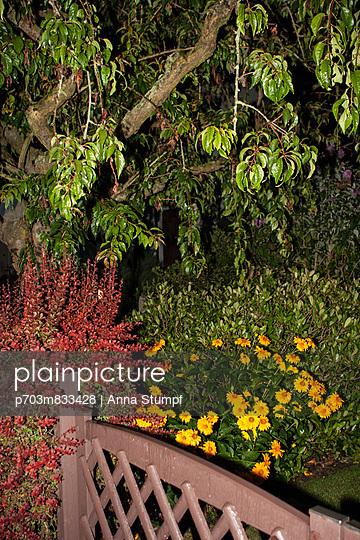 Garden at night - p703m833428 by Anna Stumpf