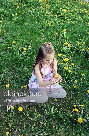Mädchen pflückt Blumen - p879m1584179 von nico