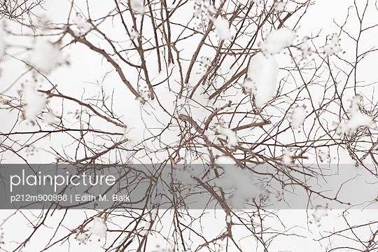 Strauch im Schnee - p212m900998 von Edith M. Balk