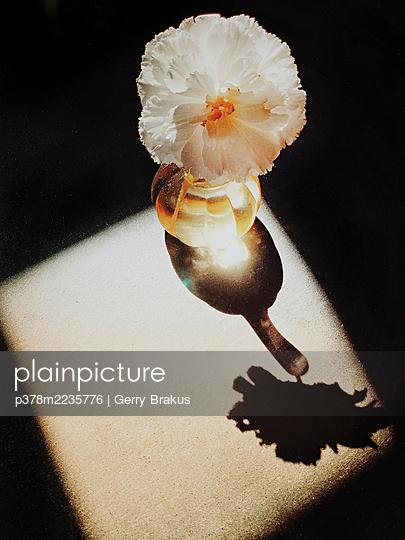 Flower in vase - p378m2235776 by Gerry Brakus