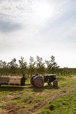 Apfelernte Altes Land - p1222m1026372 von Jérome Gerull