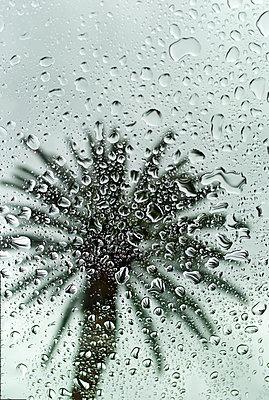 palm drops - p1553m2142424 by matthieu grospiron