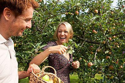Picking apples - p981m881547 by Franke + Mans