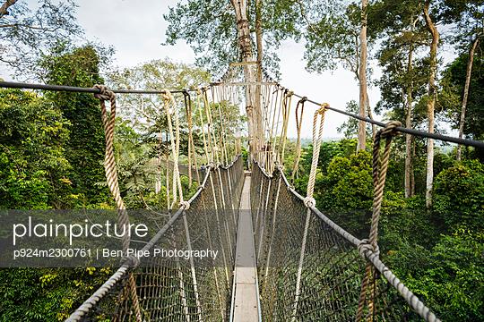 Ghana, Canopy walkway through tropical rainforest in Kakum National Park - p924m2300761 by Ben Pipe Photography