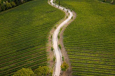 Italy, Friuli Venezia Giulia, Brazzano, Aerial view of winding country road across vast green vineyard - p300m2156487 by Mauro Grigollo