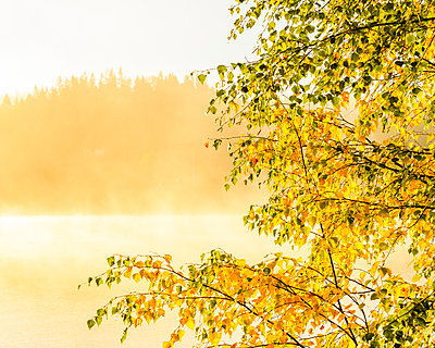 Lake in morning fog - p312m2080619 by Mikael Svensson