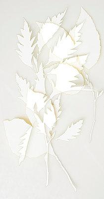 Blättercollage - p4150633 von Tanja Luther