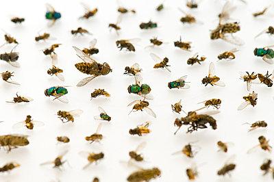 Tote Insekten - p6120261 von Pierre c.