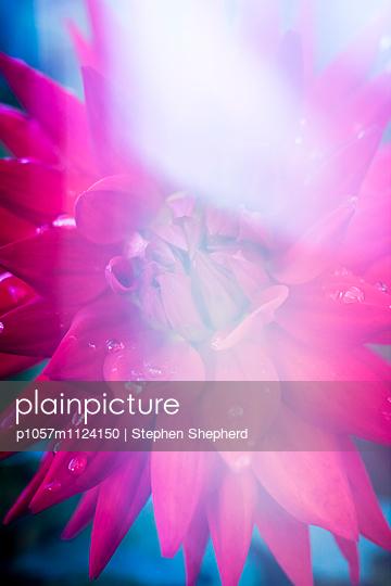 Blüte - p1057m1124150 von Stephen Shepherd