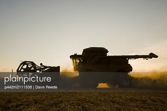 A combine harvester works in a field of yellow field peas at sunset, near Winnipeg; Manitoba, Canada - p442m2111538 by Dave Reede