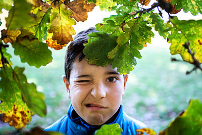 Head and shoulders portrait of boy looking at camera through leaves of oak tree, pulling a face. - p429m2165121 by Bonfanti Diego