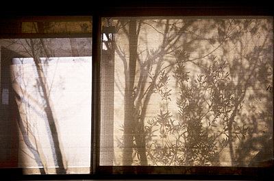 Trees through a window - p1430m1503604 by Charlotte Bresson