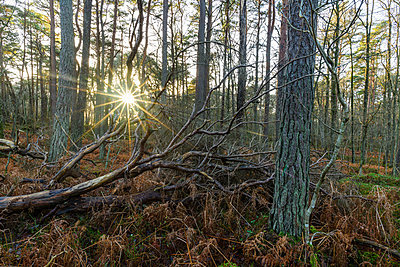 View of forest - p312m1570814 by Mikael Svensson