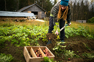 Woman digging potatoes - p312m2080645 by Fredrik Ludvigsson