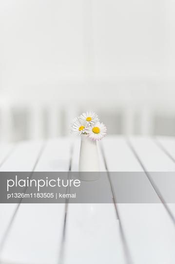 Gänseblümchen - p1326m1183505 von kemai