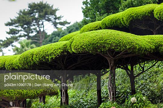 p343m1090178 von Dan (Sang Jin) Chung